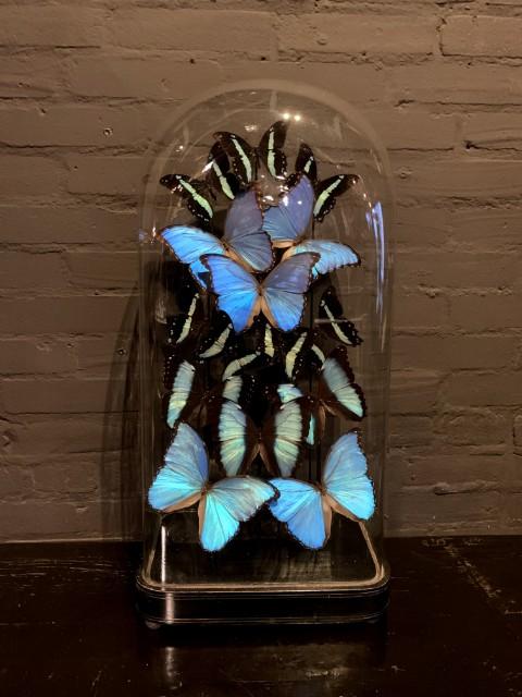 Spezielle antike Glocke mit blauen Schmetterlingen gefüllt