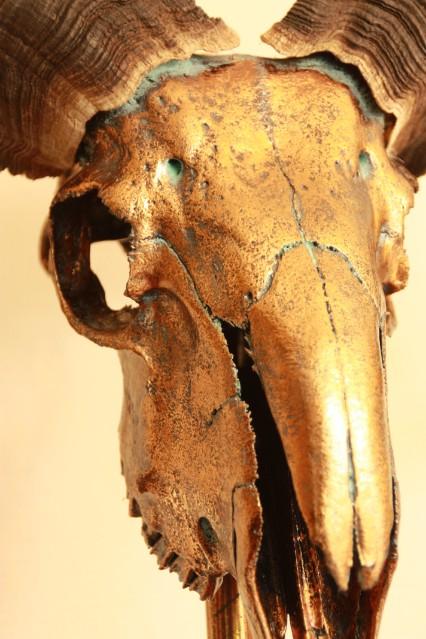 Spezieller hochwertiger metallisierter (dunkelgoldener) Schädel eines tibetischen Widders