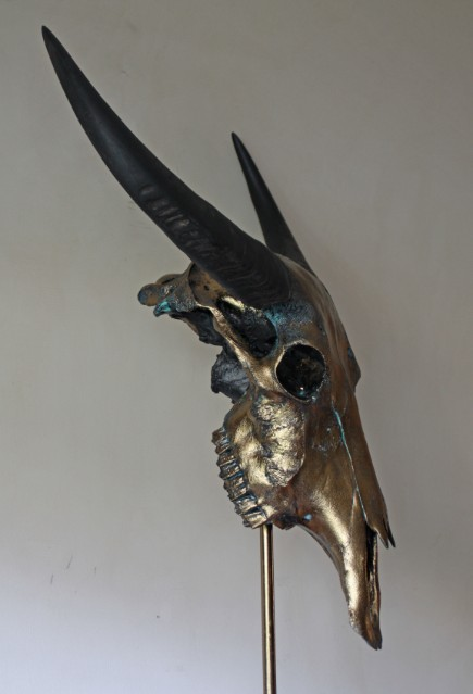 Spezieller hochwertiger metallisierter Schädel eines Wasserbüffel