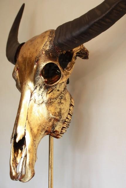 Bijzondere hoogwaardige gemetalliseerde (goud) schedel van een waterbuffel