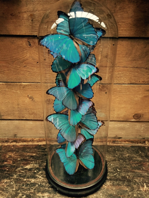 Special very large antique bell with 13 Didius Morpho butterflies