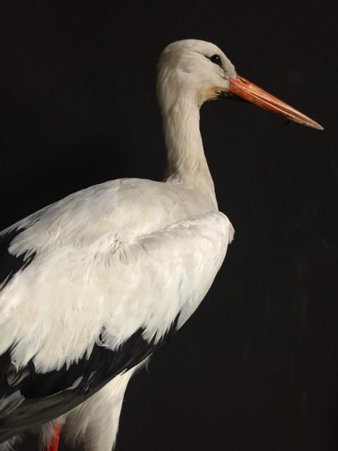 Stuffed stork