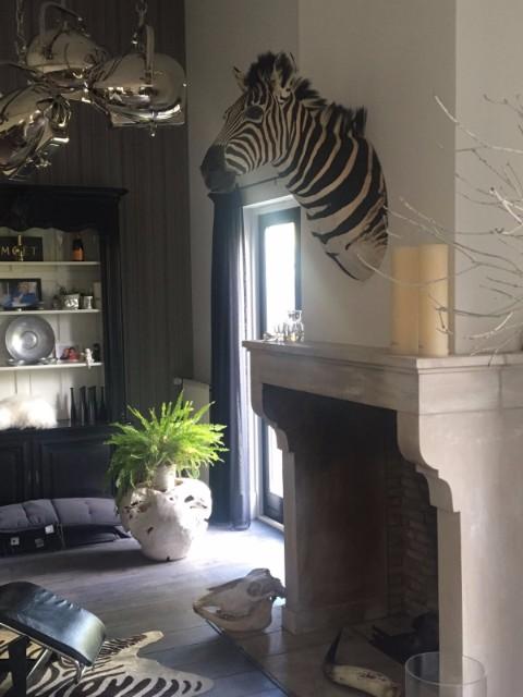 Opgezette zebrakop van de Jachtkamer