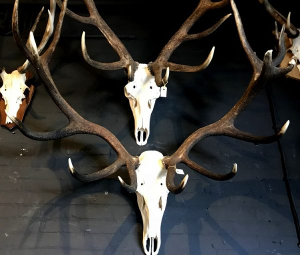 Various extremely heavy antlers