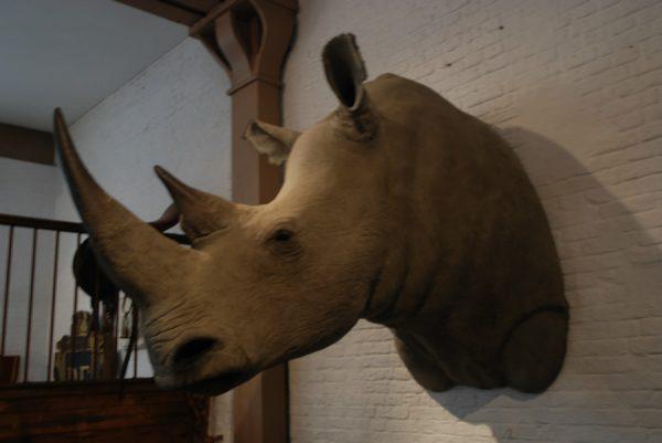 Nachbildung eines Nashornkopf