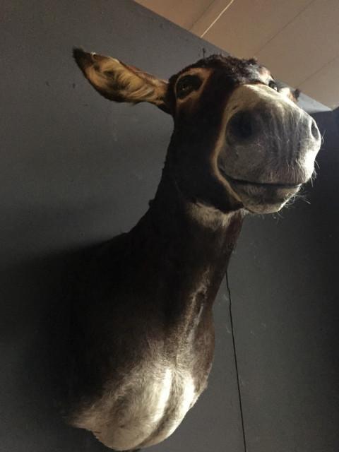 Very nice stuffed head of a donkey