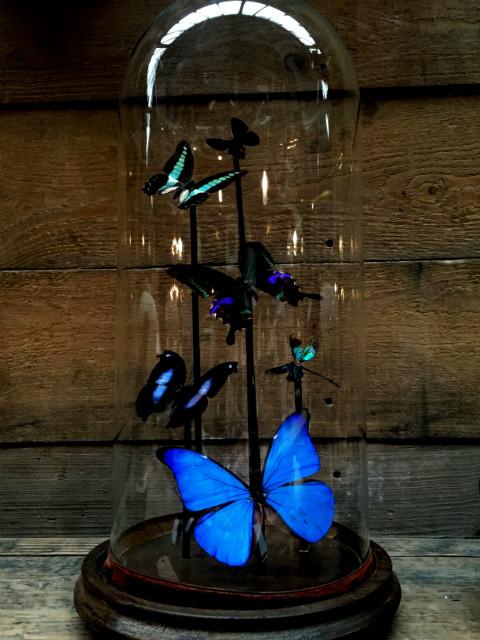 Victoriaanse stolp met vlinders