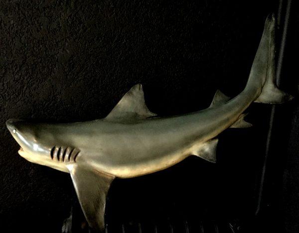 Wunderbare originalgetreue Nachbildung eines Hais