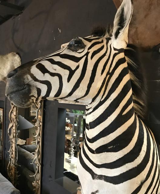 Zebra half mount