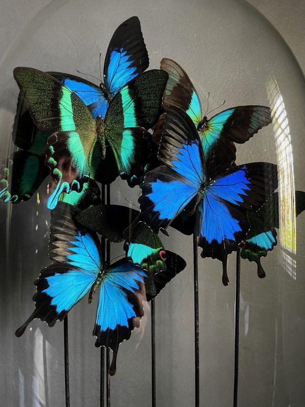 Antieke Ovale Stolp met vlinder mix