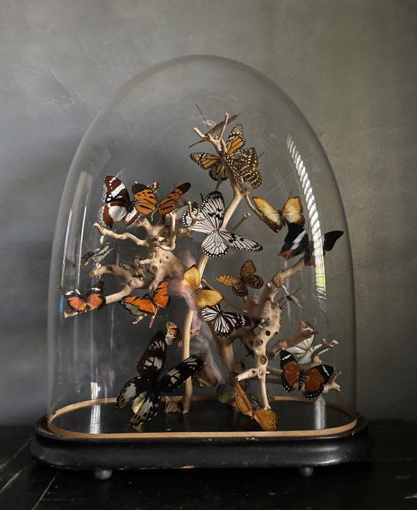 Antieke ovale stolp met een mix van vlinders