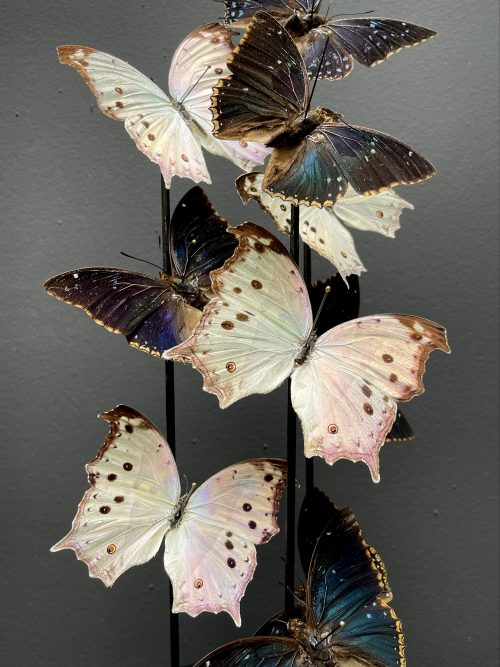 Antieke stolp met prachtige vlinders