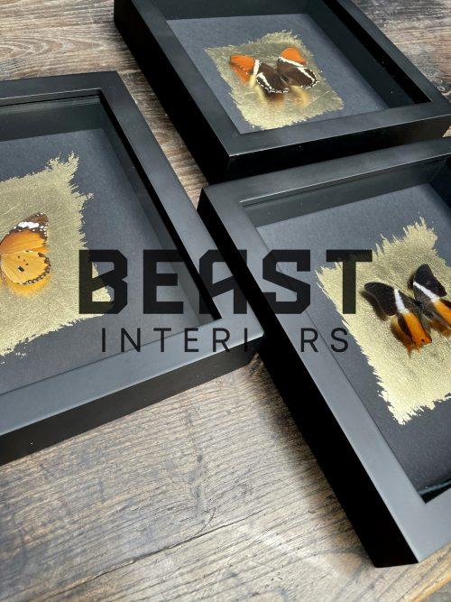 Vlinders in houten frame