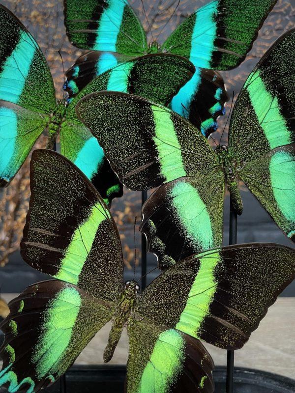 Moderne ovale vlinderstolp