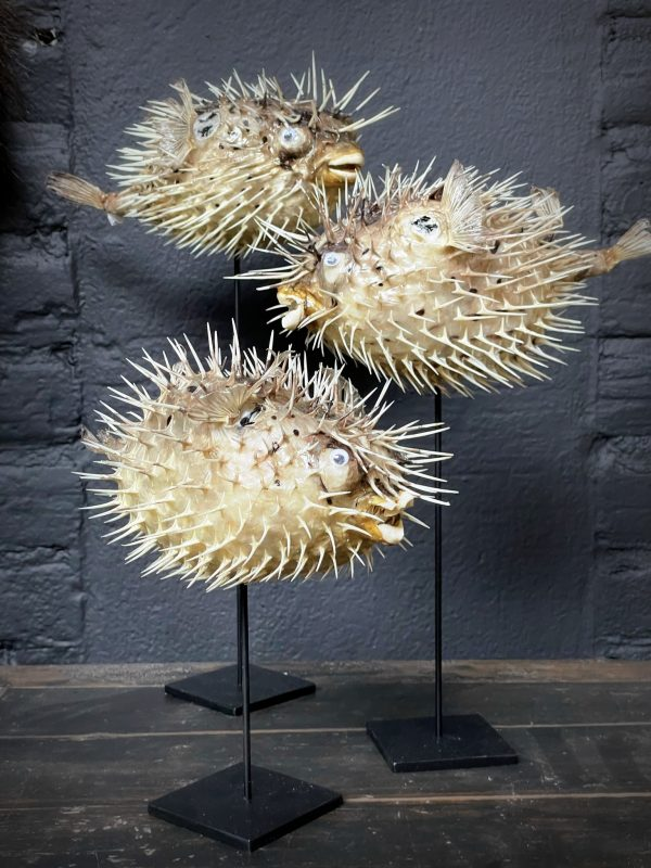 Decoratieve set van 3 kogelvissen