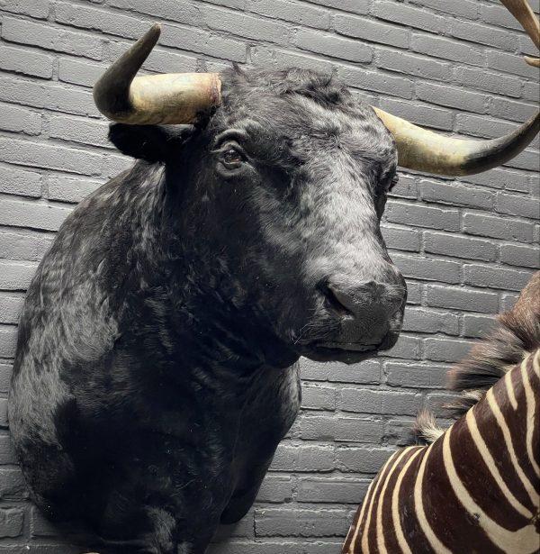 Originele zwarte Spaanse stierenkop