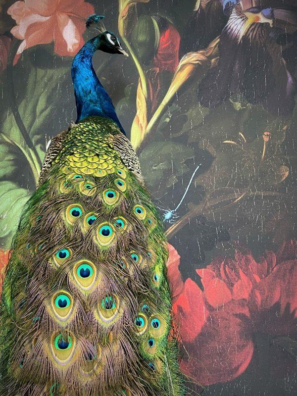 Opgezette blauwe pauw