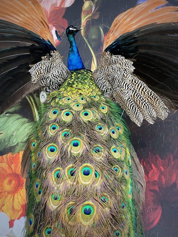 Opgezette blauwe pauw met open vleugels