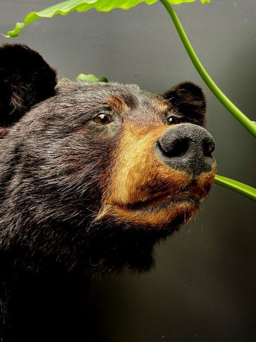 Opgezette zwarte beer